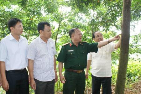 Thiếu tướng Ngô Văn Hùng, Phó Tư lệnh QK kiểm tra vườn cây cao su tỉnh Lai Châu.