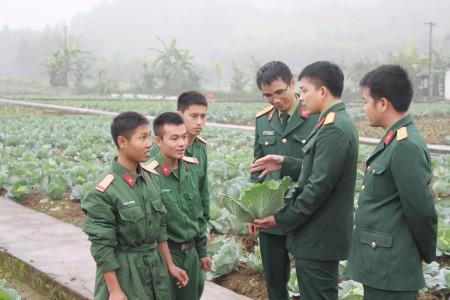 Vườn rau sạch đủ nhu cầu cho bộ đội trước và sau Tết đón chiến sĩ mới. (Ảnh: ĐỨC ĐÀO)