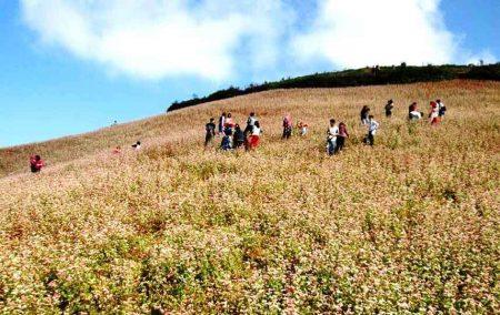 Du khách đổ về ngắm mùa hoa tam giác mạch.